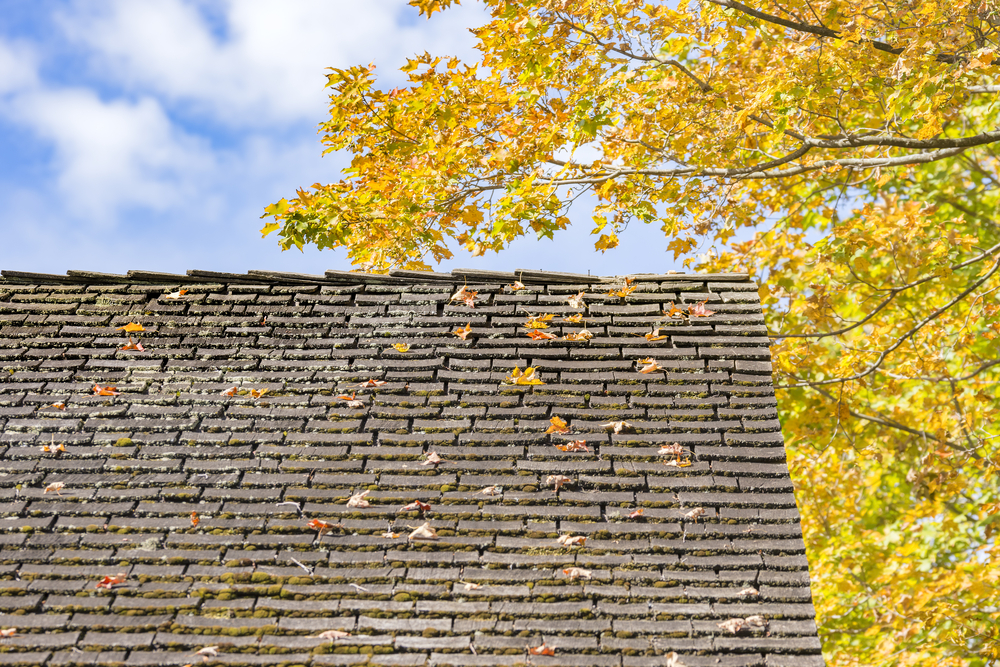 Old Roof with leaves
